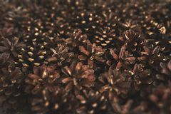 A lot of pine cones. Design mockup. A lot of pine cones Stock Image
