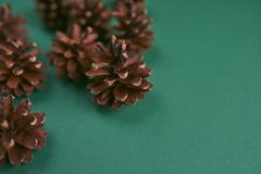 A lot of pine cones on green background. Design mockup. A lot of pine cones on green background Stock Images