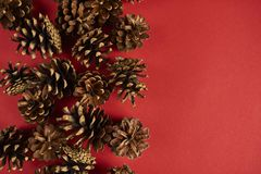 A lot of pine cones on red background. Design mockup. Top view. A lot of pine cones on red background Stock Photos