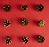 A lot of pine cones on red background. Top view. A lot of pine cones on red background Stock Photography