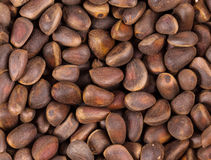 Lot of pine nuts. Close up. Stock Image