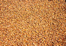 A lot of pine nuts Royalty Free Stock Images