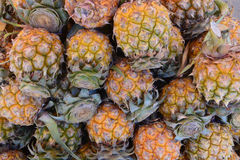 A lot of pineapple Royalty Free Stock Photo