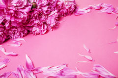 A lot of pink peony petails on paper colorful background Royalty Free Stock Image