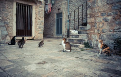 Lot of playful cats in old Europe town street  waiting for food in vintage style. Lot of playful undomestic cats in old Europe town street  waiting for food in Stock Image