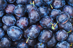 Lot of plums Royalty Free Stock Images
