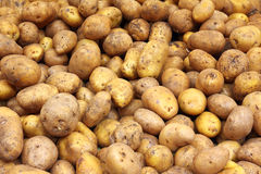 Lot of potatoes Stock Photo