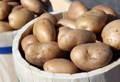 A lot of potatoes Royalty Free Stock Photography