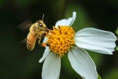 Lot pszczoła fotografia stock