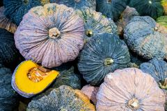 A lot of pumpkin at outdoor farmers market.Recently harvested pumpkins in a random pile. Vegetable oil , stack of vegetable oil.a pile of picked pumpkins ready stock photo