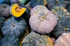 A lot of pumpkin at outdoor farmers market.Recently harvested pumpkins in a random pile. Vegetable oil , stack of vegetable oil.a pile of picked pumpkins ready royalty free stock photo