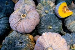 A lot of pumpkin at outdoor farmers market.Recently harvested pumpkins in a random pile. Vegetable oil , stack of vegetable oil.a pile of picked pumpkins ready stock images
