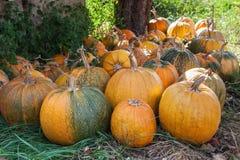 Lot of pumpkin at outdoor Stock Photos