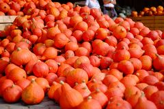A lot of pumpkins in the fresh market royalty free stock image