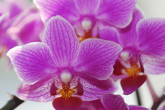 Lot of purple orchid Stock Photo
