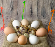 A lot of quail and chicken eggs for painting lying in a pile on wooden table sackcloth standing next to three giraffe Royalty Free Stock Photography