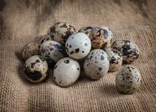 Lot of quail eggs on sacking Close-up Stock Images