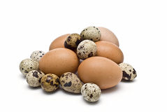 A lot of quail and hen egss. Stock Photo
