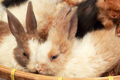 A lot rabbits for sale Stock Photography