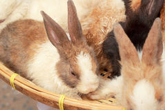 A lot rabbits for sale Stock Images