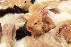 A lot rabbits for sale Stock Photo
