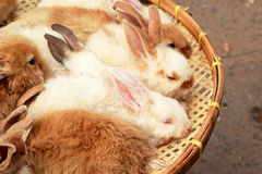A lot rabbits for sale Royalty Free Stock Photos