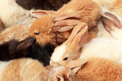 A lot rabbits for sale Royalty Free Stock Photography