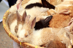 A lot rabbits for sale Stock Image