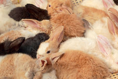 A lot rabbits for sale Stock Photos