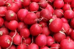A lot of radish on the tray. A lot of red radish, harvesting Stock Photos