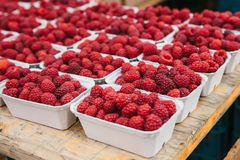 A lot of raspberries in containers on the table in a row. Useful food is rich in vitamins. Harvest. The farm market Stock Images