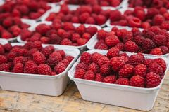A lot of raspberries in containers on the table in a row. Useful food is rich in vitamins. Harvest. Royalty Free Stock Photography