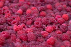 A lot of raspberries. In the farm Royalty Free Stock Photography