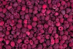 A lot of raspberries. In the farm Stock Image