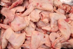 Lot of raw chicken wings backround royalty free stock images