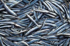 Lot of raw fresh anchovies fishes. Top view. Sea food background. Theme Stock Photo