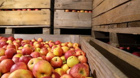 Lot of red apples stock video footage