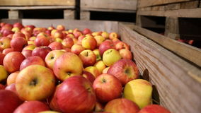 Lot of red apples stock video