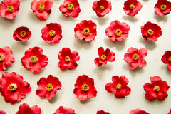 A lot of red camellia flowers on white background Stock Photos