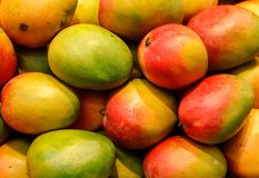 Lot of red fresh mango fruits Stock Photography
