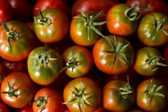 A lot of red and green tomatoes, top view of the vegetables. Hea. Lthy food, beautiful background Royalty Free Stock Photo