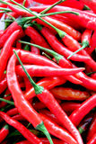A lot of Red hot chili. Stock Photography