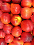 A lot of red nectarines Royalty Free Stock Photography