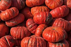 A lot of red pumpkins at outdoor farmers market.  Royalty Free Stock Photos