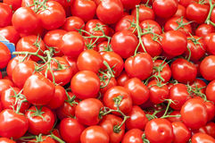 A lot of red ripe cherry tomatoes on the market close up on sunn Royalty Free Stock Images