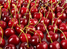 A lot of red ripe cherry Royalty Free Stock Photos