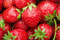 Lot of red ripe strawberries Stock Photography