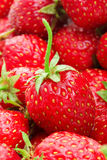 Lot of red ripe strawberries Stock Images