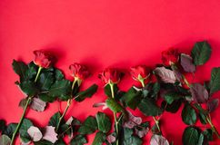 A lot of red roses on a red background stock photos