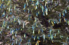 A lot of ribbons in the colors of the Ukrainian national flag adorn the branches of a tree. Performance for EuroMaida. N stock photos